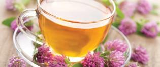 Hofigal - plante medicinale