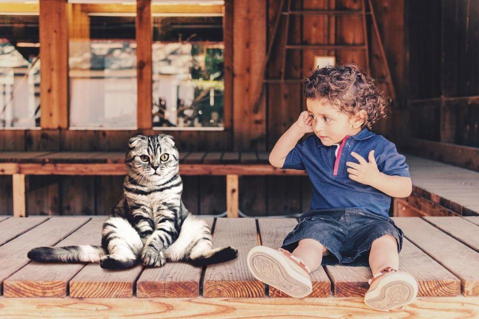 Pisica-un-nou-membru-în-familia-voastră-mic-ghid-de-creștere-și-îngrijire-ale-unei-pisici